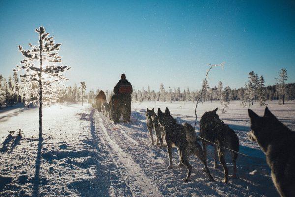 Traîneau à chiens, Laponie, Finlande, village du Père Noël